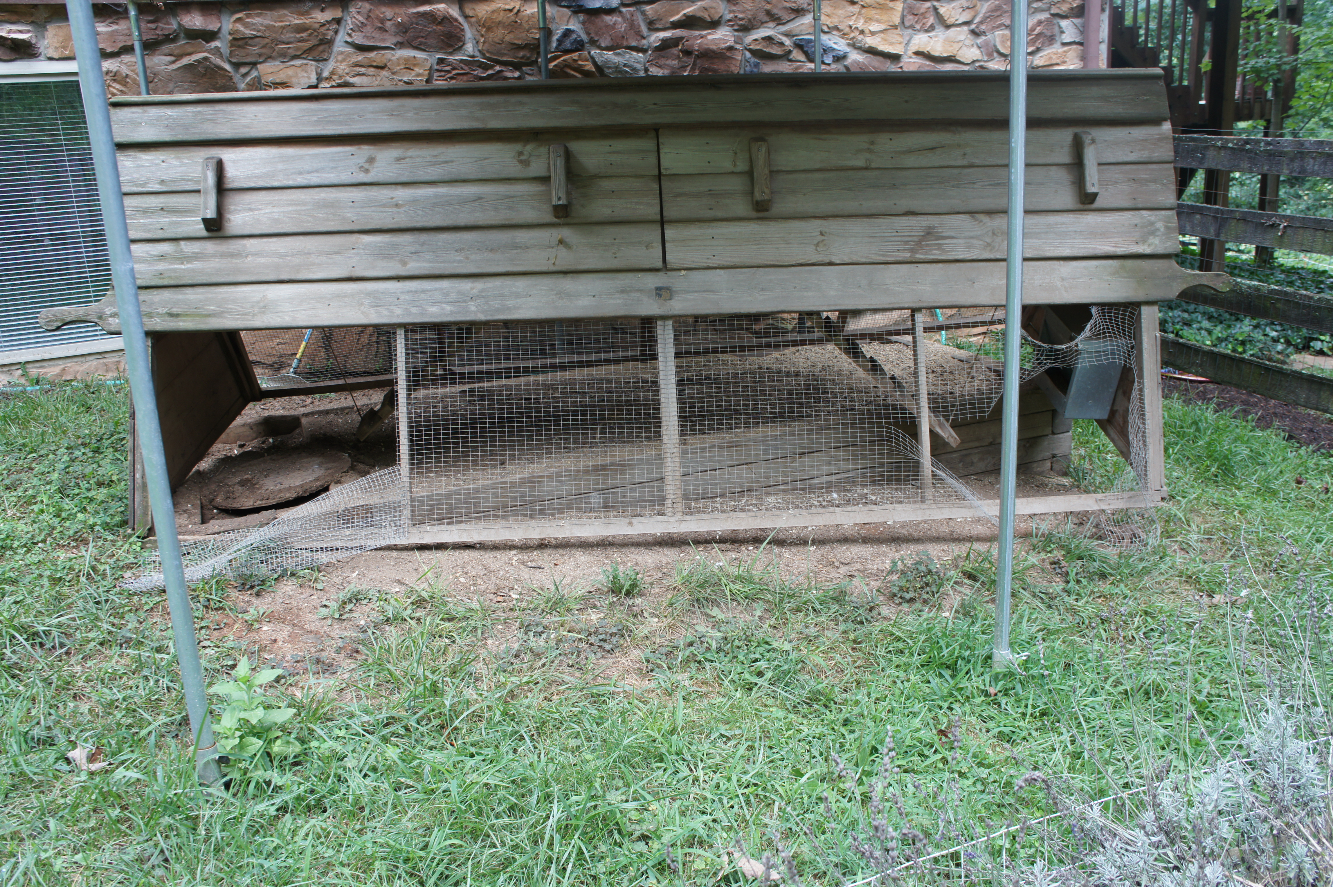 Our Chickens | Twin Creeks Musings