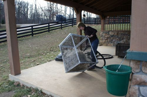 blowing the dust out of the fiber--off of the llama.