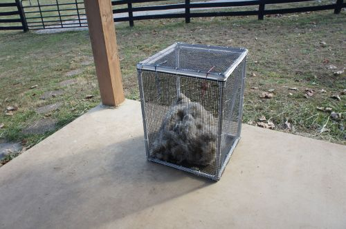 Blow Out Box with 1 Raw Llama Fleece