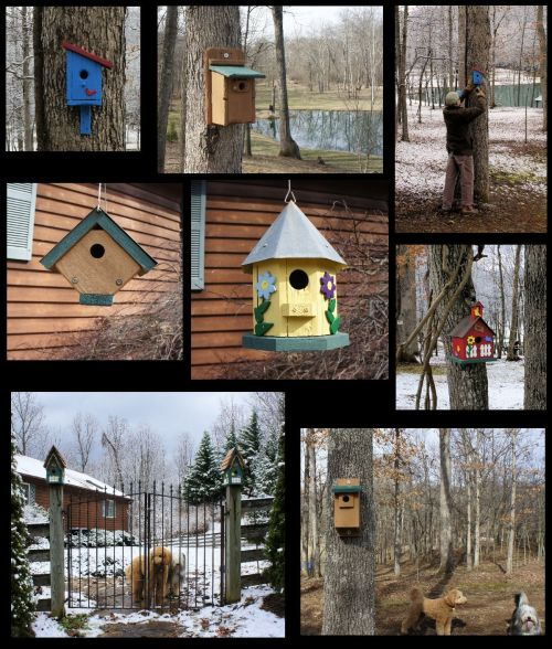 birdhouse collage 1