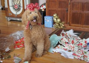 Christmas Bayley