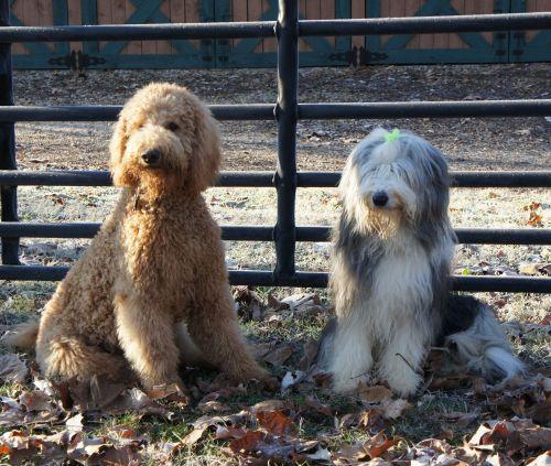 Bayley and Mayzie