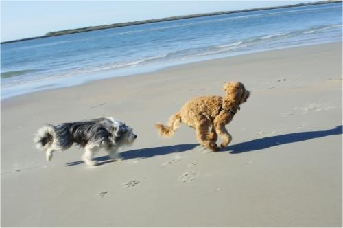 Beach Romp
