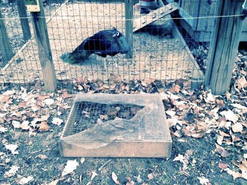Torn feeder tray