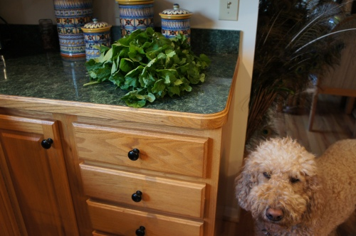 A mess of greens, as we say in the south, and my sous chef, Bayley
