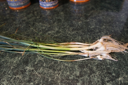 Wild spring onions. Use only the green tops